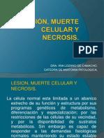 Lesion, Muerte Celular y Necrosis