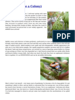 Aphids Pest Control for your Garden