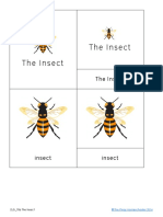 The Insect Nomenclature and Definition Cards