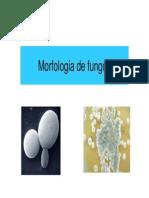 Aula 5. Morfologia de Fungos