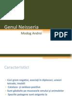 Genul Neisseria