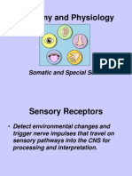 Somatic and Special Senses powerpoint 2006.ppt
