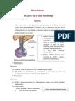 Neurotransmisores y Endocrinologia