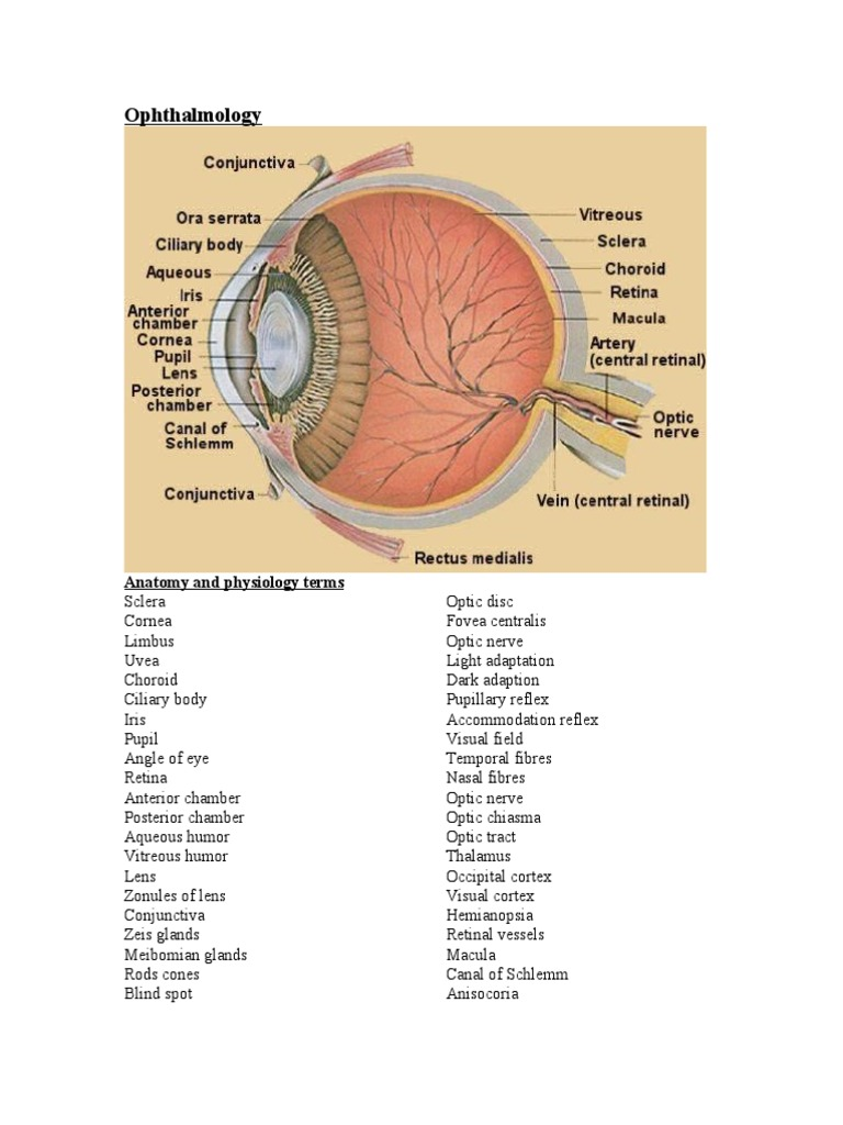 Ophthalmology | Facial Features | Human Eye
