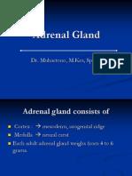 Adrenal Gland ...