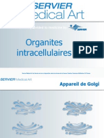 Organites_intracellulaires