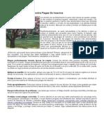 Protección De Árboles Contra Plagas De Insectos.doc