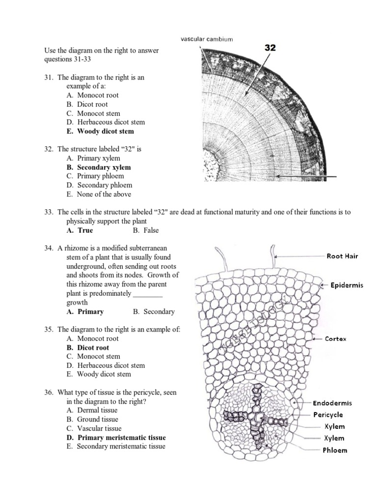 Anatomy Of Monocot Root Gallery - human body anatomy