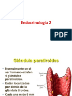 Endocrinología 2