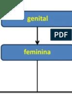 urogenital