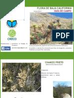 Flora Californiana Baja Resolucion