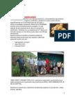 Rainforest Organic Peru