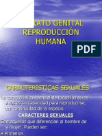 Aparato Genital Modificado (1)