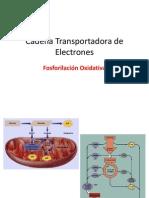 Cadena Transport Ad or A de Electrones
