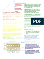 photosynthesis igcse revision guide
