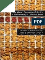 Usa Walnut Varieties 0