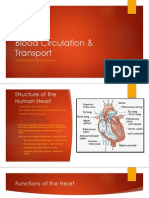 Blood Circulation & Transport