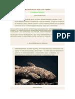 peces anfibios