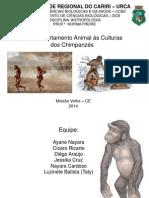 Apresentação de Antropologia