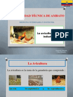Ramas de La Avicultura