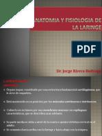 anatomiayfisiologiadelalaringe-121218151648-phpapp01