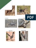 imagenes de animales de la pradera.docx