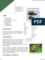 Helix Aspersa - Wikipedia, La Enciclopedia Libre