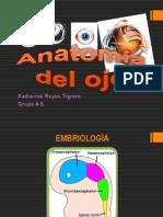Anatomia Del Globo Ocular