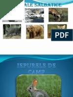 presentareanimale-130702040154-phpapp01