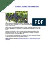 Cum Vrea Vincon Vrancea Sa Ajunga Numarul 1 Pe Piata Vinurilor - Copy