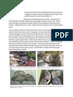 Jurnal Forensik Kasus 3-FELI