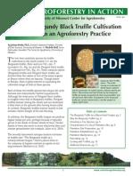 Burgundy Black Truffle Cultivation