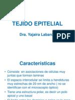 TEJIDO EPITELIAL 2