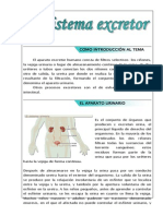 ciencias - sistema excretor.docx