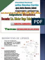 6 CLASE 12-05-14 Metabolismo de Lípidos