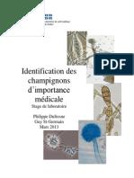 Identification Champignons Importance Medicale