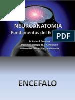 1 Neuroanatomia y Citoarquitectura i