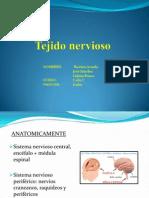 Tejido Nervioso (2)