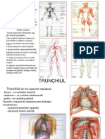 anatomie curs1 2012