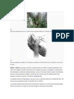 Epifita plantas