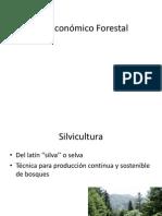 Ciclo Economico Forestal