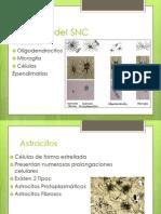 Células Del SNC
