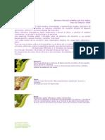 SISTEMA-FLORAL-CORDILLERA-DE-LOS-ANDES.pdf