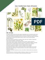 As 230 Plantas Medicinais Mais Eficazes