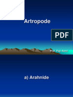 Lectie 15 Artropode Arahnide Si Crustaceae
