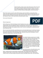 Herring Fish Facts