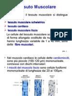 Contrazione Muscolare e Metabolismo Del Muscolo