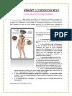 Neisseria meningitidis.docx