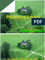 Passaros Livres