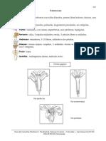 17. Caricaceae